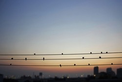 Birds on electric wires in the big city at twilight