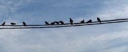 Birds on electricity wires against blue sky.  close up