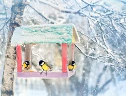 birds on feeder on winter day. birds Tits (parus major) eating seed from bird feeder, winter season. human care of birds, problem of survival of birds, environment
