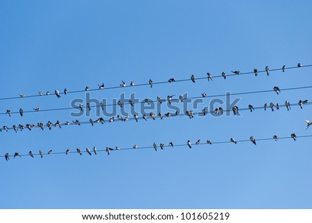 birds on high voltage cables