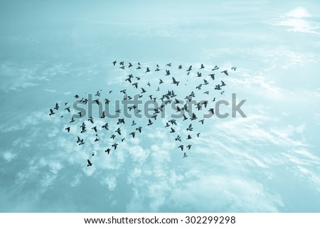 Birds on sky , growth development business team work concept , art abstract nature background