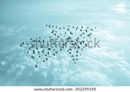 Birds on sky , growth development concept