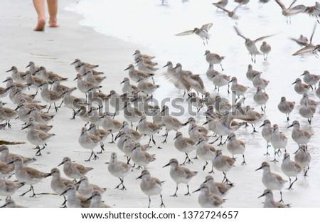 Birds on the Beach #1372724657
