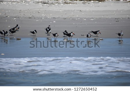 Birds on the coastline #1272650452