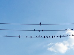 Birds on the electrical cable lines.