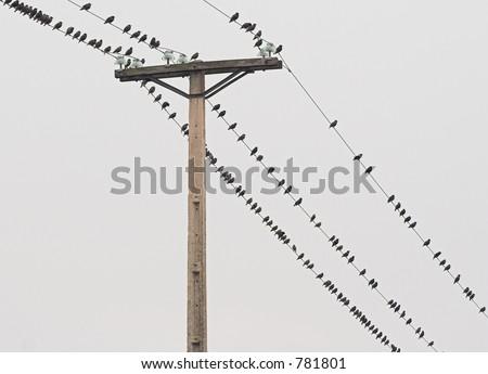 Birds on the line 2 - stock photo