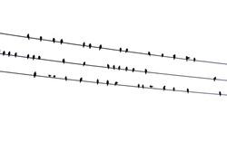 Birds on the wire, Vectors image, Ali jeet