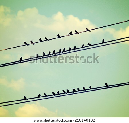 birds on wires over blue sky...