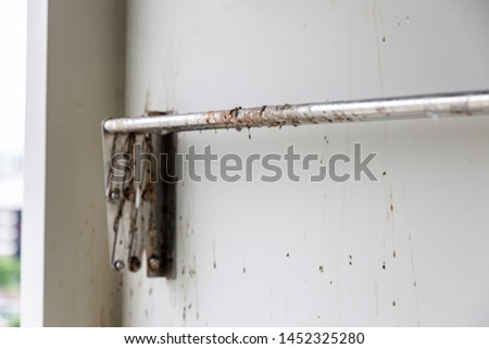 Birds or pigeons make clothes line and wall dirty by dropping a lots of poops when owner of condominium is not home for long time. It has pathogens and person can get cryptococcosis from rock pigeon #1452325280