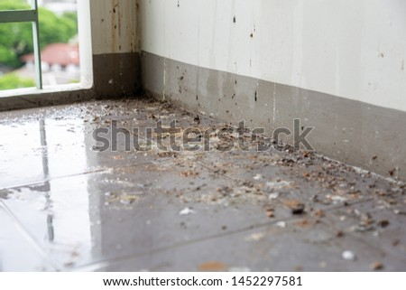 Birds or pigeons make floor and wall dirty by dropping a lots of poops when the owner of house is not home for long time. It has pathogens and some person can get cryptococcosis from rock dove #1452297581