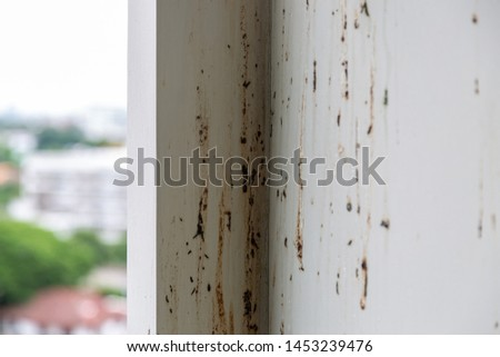 Birds or pigeons make wall dirty by dropping a lots of feces when the owner of condominium is not stay at room for long time. It has pathogens and some person can get cryptococcosis from rock pigeons #1453239476
