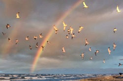 Birds over a Baltic Sea Beach on a Sunny Day with Rainbow