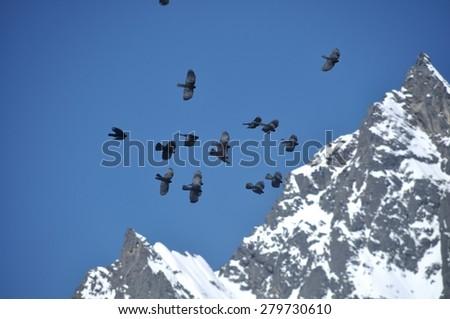 Birds over the Himalaya