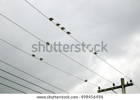 Birds perched on electricity wires in a very cloudy day #498456496