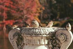 birds posing on top of a sculpture