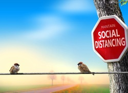 Birds practicing social distancing. Covid-19 awareness theme concept with humour.