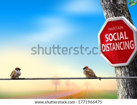 Birds practicing social distancing. Covid-19 awareness theme concept with humour. Stock photo ©