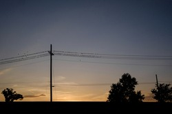Birds roosting on power lines at sunset in Knoxville, Tennessee, USA.