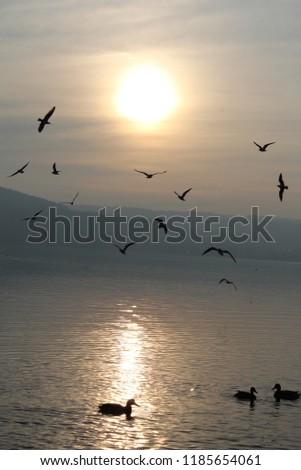 birds sea gull flying sun sky white lakeside #1185654061