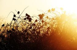 birds silhouette on sunset