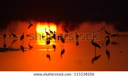 birds silhouettes at sunset