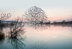 birds silhouettes flying above the lake against sunset