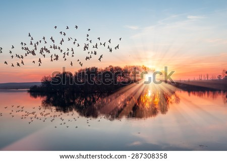 Birds silhouettes flying above the lake against sunset #287308358