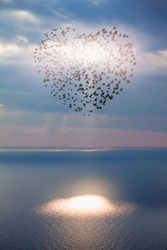 Birds silhouettes flying above the sea (in shape of heart)