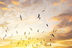 Birds silhouettes flying sunset sky.