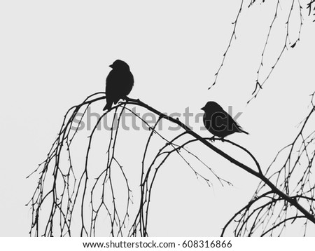 Birds silhouettes on the branch of a birch. Black-and-white.
