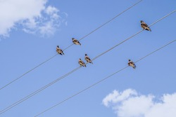 Birds sit on the power line. Wires against the cloudy sky. Birds on wires.