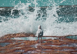 Birds sitting at the rock platform with waves crashing