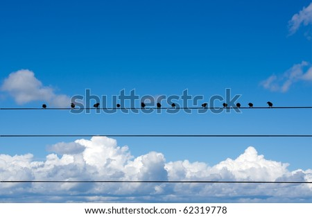 Birds sitting on a wire against the sky - stock photo