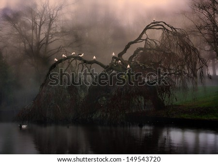 Birds sitting on eerie weeping willow tree in the fog