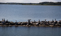 Birds sitting on the Wave breaker