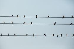 Birds, small high-voltage lines.