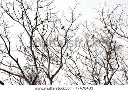 Birds standing on dead tree - stock photo