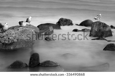 birds standing on the rocks in...