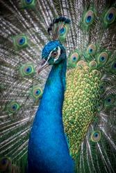 Birds Wildlife Animals