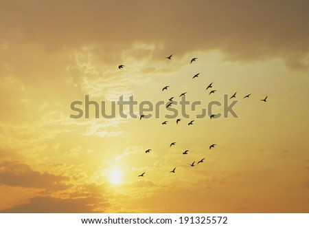 birds with sunset #191325572