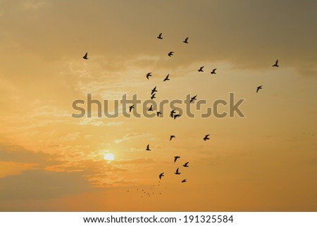 birds with sunset #191325584