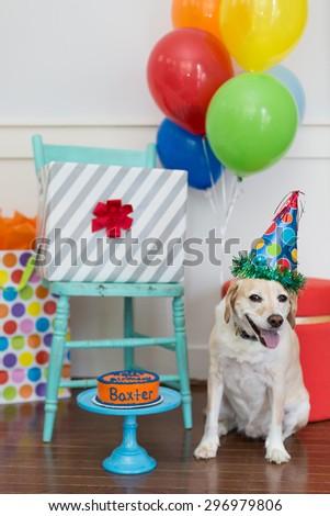Birthday boy dog celebrates his party