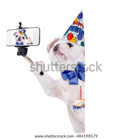 Birthday dog taking a selfie together with a smartphone. Over white banner.