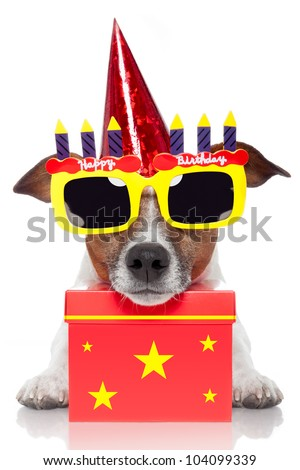 birthday dog with a red box - stock photo
