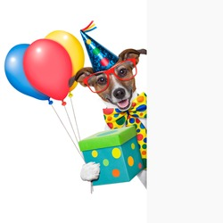 birthday dog with balloons behind a white placard