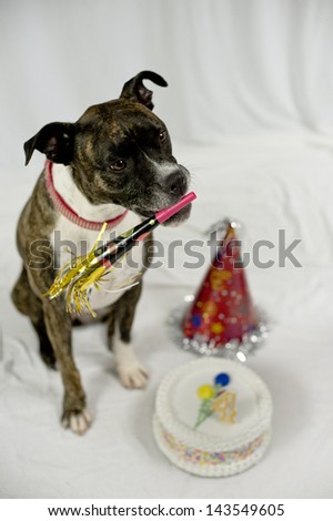 Birthday dog with cake, party hat, party whistle
