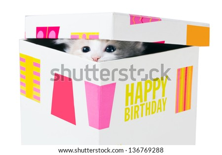 Birthday gift. Kitten peeking through the crack between the lid and the box  isolated on a white background