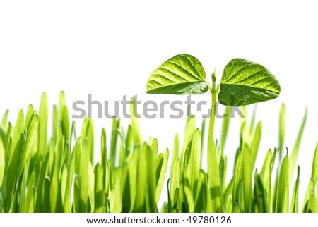 Birthday of a small plant in Sunshine