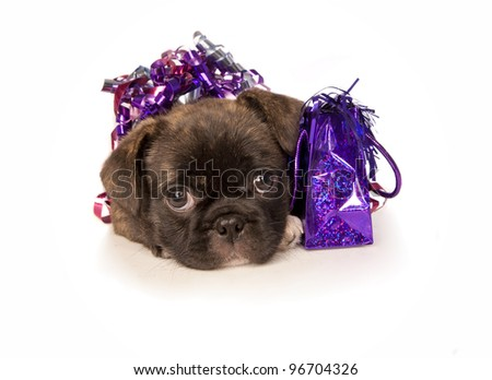 Birthday Party puppy with gift bag and ribbons isolated on white