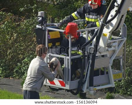 BISKUPIEC, POLAND - SEPTEMBER 29: Firefighters rescue a cat from a tree, September 29, 2013 in Biskupiec, Poland.